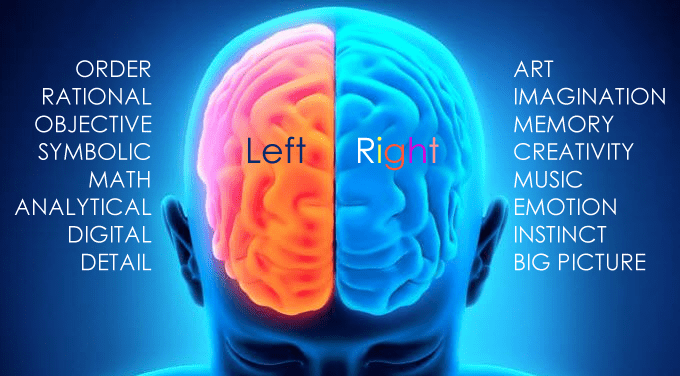 Left Brain Vs Right Brain Seattle Web Design Web Developer